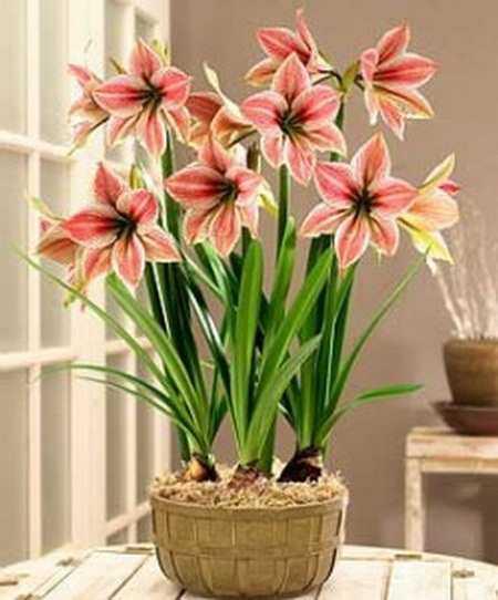 Цветы в вашем интерьере